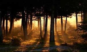 awakening-forest-light-small-300